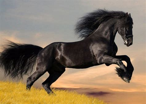 50 beautiful horse pictures