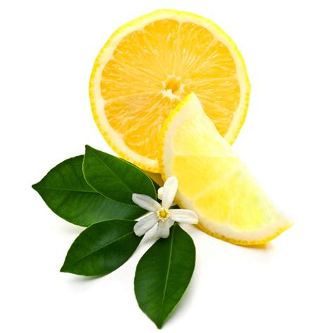 The Lemon Blossom lemon blossom and lemon www pixshark images