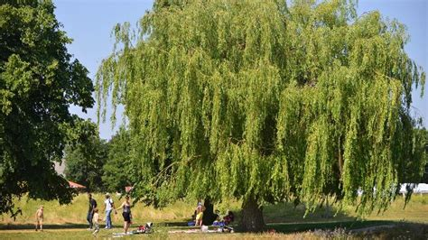 wandle spot wandle park croydon park visitlondon