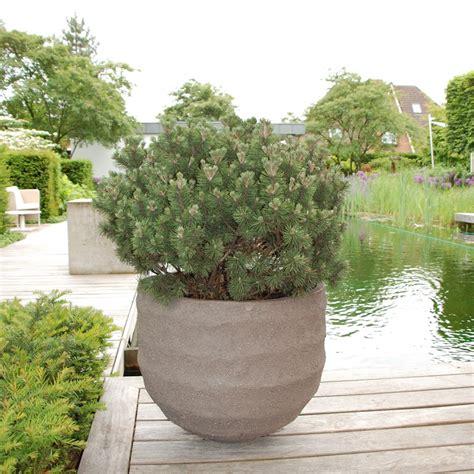 grosse pflanzentöpfe solit 228 re im topf zinsser gartengestaltung schwimmteiche