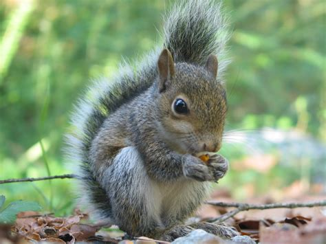 list of color blind animals squirrels animals and