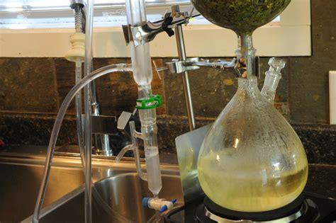 hydroponics herbs essential oil extractions grozinegrozine