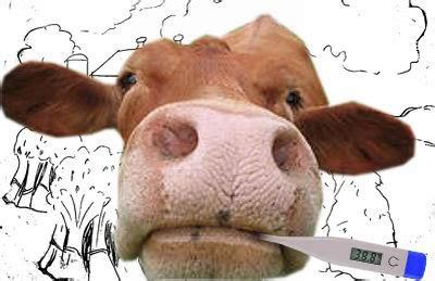 Obat Cacing Sapi penyakit sapi dan pengendaliannya