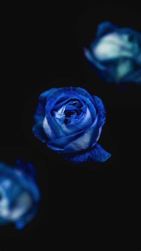 blue roses iphone wallpaper idrop news