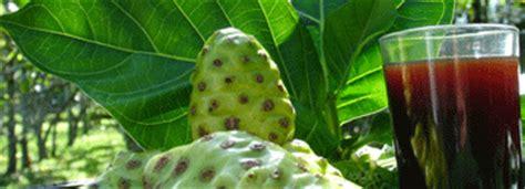 Tahitian Noni Juice Jus Mengkudu Pulau Tahiti 100 Asli Original noni health anti inflammatory hypertension tumor