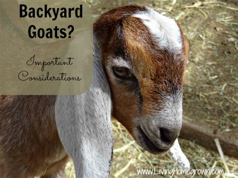 how to raise goats in your backyard how to raise goats in your backyard 28 images raising
