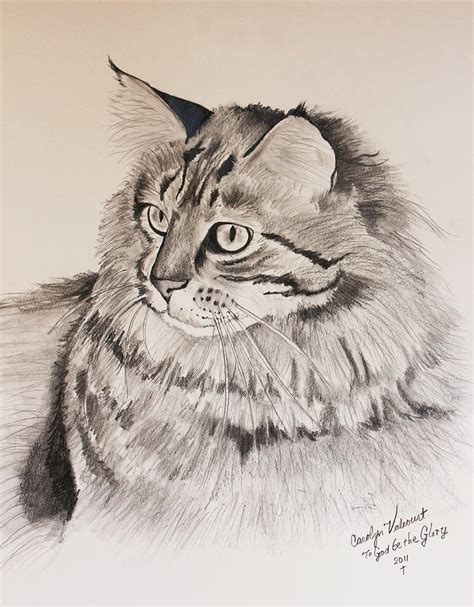 how to a coon how to draw maine coon