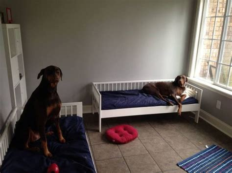 ikea dog ikea toddler bed for dogs furniture pinterest
