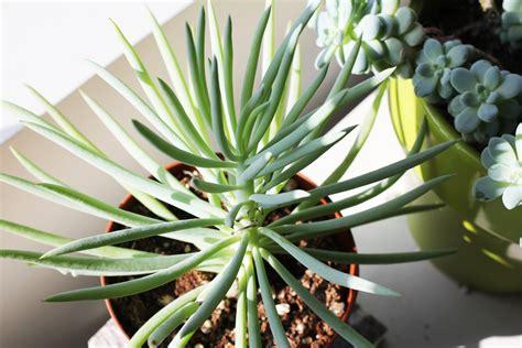 succulent plant succulents ahbe lab