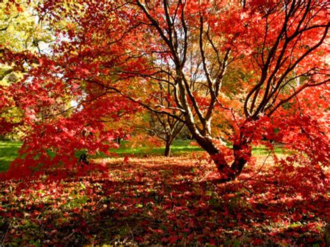 westonbirt, the national arboretum, digital photography