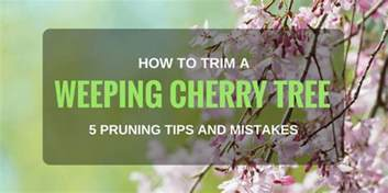 how to trim trees how to trim a weeping cherry tree 5 pruning tips and