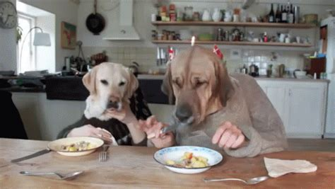 two dogs dining gif cute funny dogs discover & share gifs