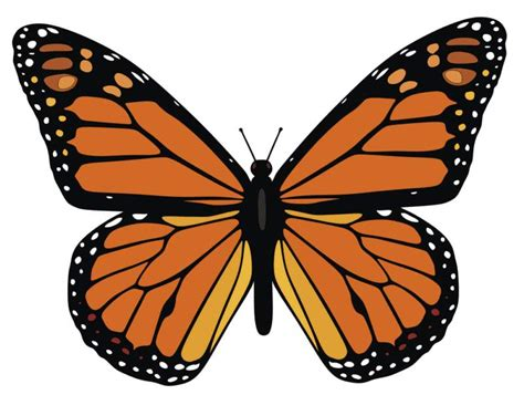 monarch butterfly template cliparts co