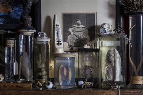 the viktor wynd museum of curiosities and