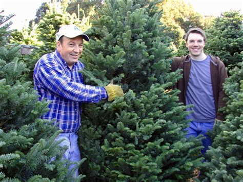 christmas tree lot business menlo park kiwanis club tree lot is open for business inmenlo