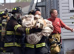 out of the dog house rescue moment firefighters resuscitate dying labrador with oxygen mask after fire daily
