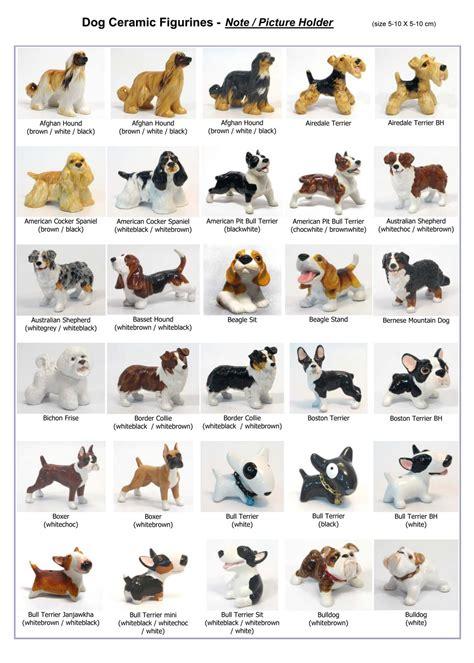 dog breeds  pictures dog training home dog types