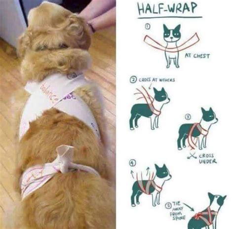anxiety wrap a simple scarf may be the solution to your s anxiety on new year s barkpost