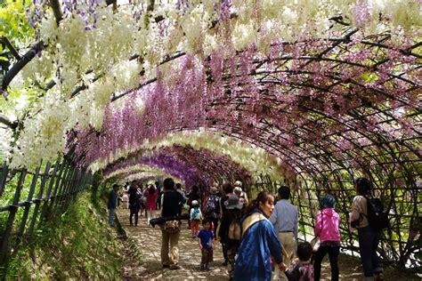 kawachi fuji garden kawachi fuji garden in kitakyushu 187 zooming japan