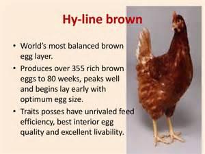 Poultry sector in srilanka