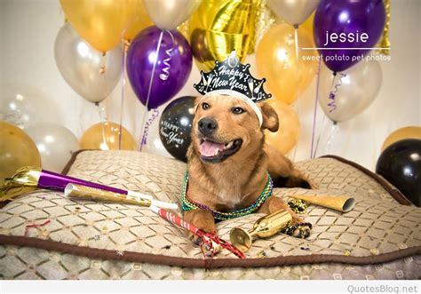 new year animals every year animals happy new year wallpapers images 2016