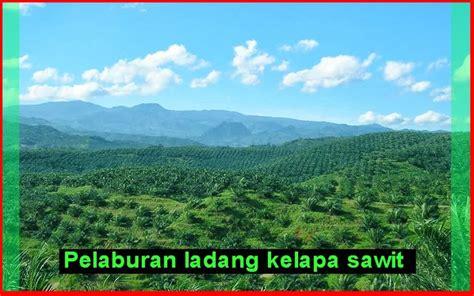 Minyak Kelapa Sawit Malaysia pelaburan ladang kelapa sawit di malaysia yg menguntungkan