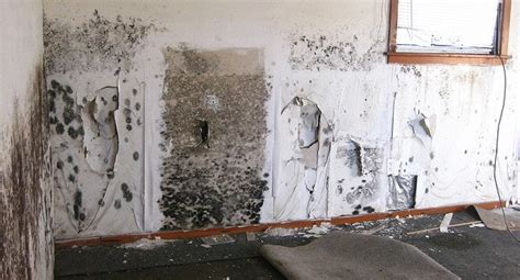 mold danger with water in cabinetry
