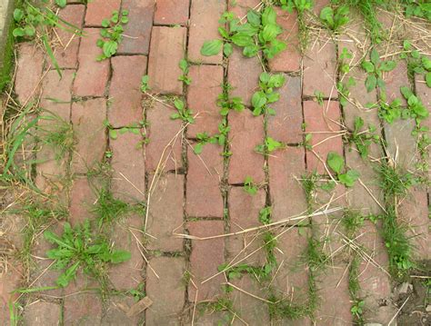 Patio Pavers Weeds How To Get Rid Of Patio Weeds Without Chemicals