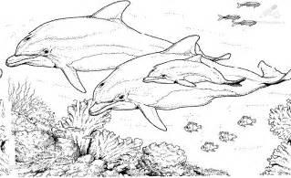 kleurplaat dolfijn