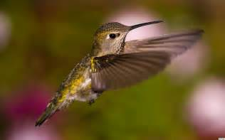 plant a native garden in oregon to attract hummingbirds