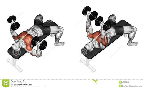 dumbbell bench press muscles worked the gallery for gt dumbbell bench press muscles worked