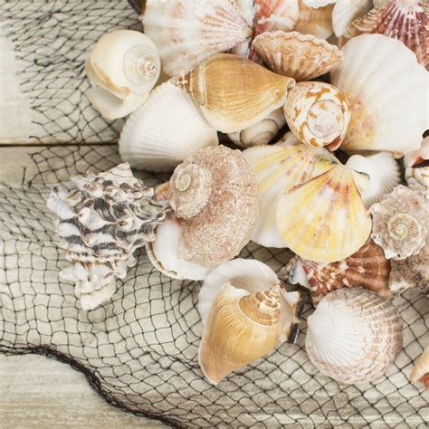 Seashell Vase Filler by 17 Best Images About Destination Weddings On