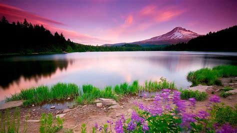imagenes hermosas full hd горное озеро с цветами широкоформатные hd обои на рабочий