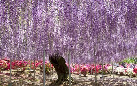 ashikaga flower park ashikaga flower park by yeoh yi le dorcas 7 omega