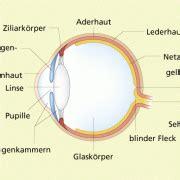 Beschriftung Des Auges by Auge In Biologie Sch 252 Lerlexikon Lernhelfer