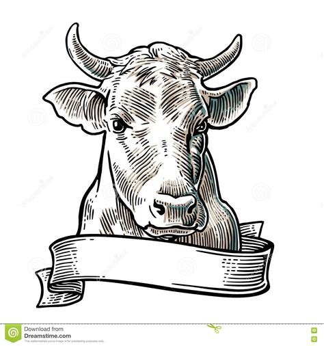 sketchbook transparan cows in a graphic style stock vector