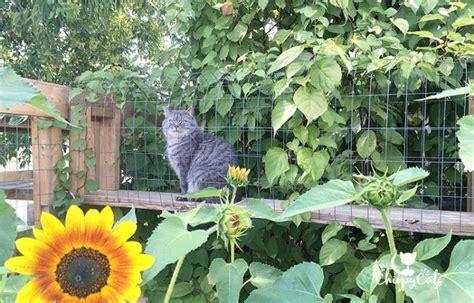 build  catio  cat  love   catio