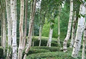 Home Design Duluth Mn betula on pinterest birches betula pendula and hill garden