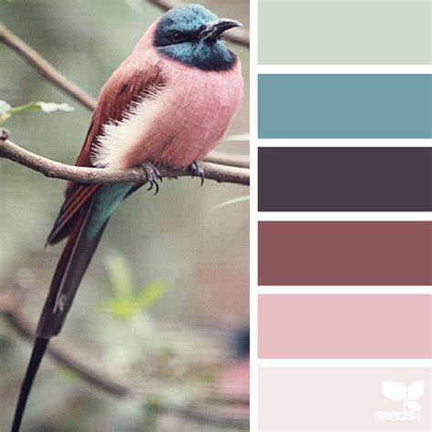 colors from nature design seeds color palettes inspired by nature