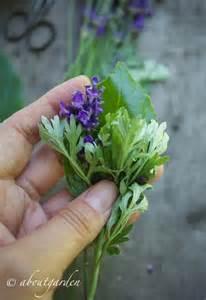 come eliminare le tarme dall armadio antitarme naturale agli aromi aboutgarden
