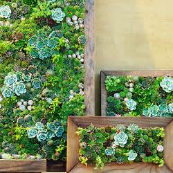 How To Make A Vertical Garden With Succulents Succulent Frames How To Make Vertical Succulent Gardens