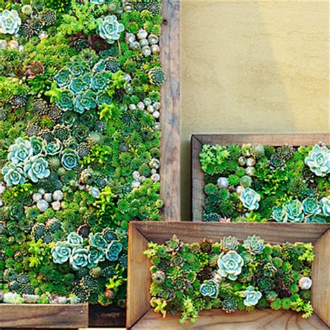 Make A Vertical Garden Succulent Frames How To Make Vertical Succulent Gardens