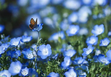 wallpaper flower tumblr blue blue flowers tumblr wallpaper