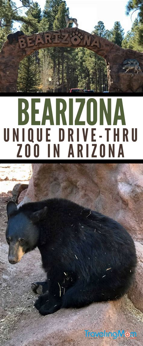 drive zoo near me arizona road trip detour bearizona wildlife park