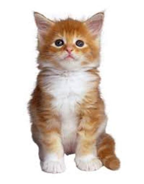 imagenes de niños jugando al gato y al raton informaci 243 n sobre animales dom 233 sticos informacion sobre