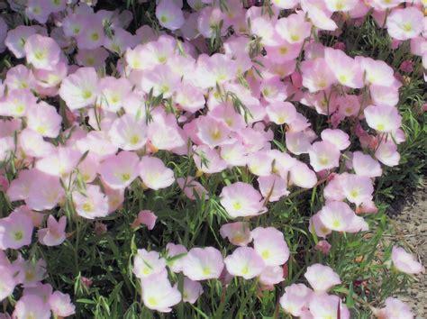 Fragrant Garden Plants - willoway nurseries inc the midwest s premier wholesale grower