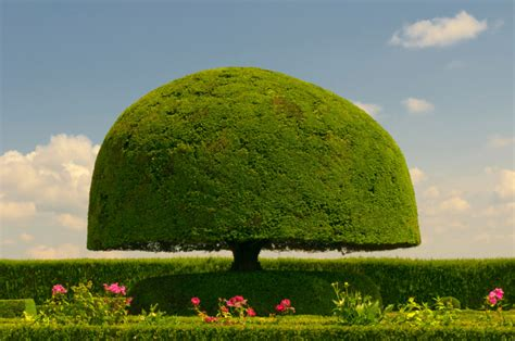 Green Boy Nursery by 53 Stunning Topiary Trees Gardens Plants And Other Shapes