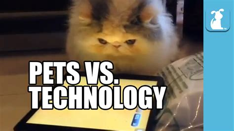 pet technologies company youtube pets vs technology funny compilation youtube