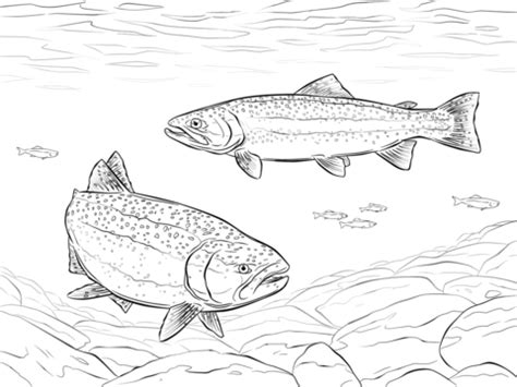 trout fish coloring pages rainbow trouts coloring page free printable coloring pages