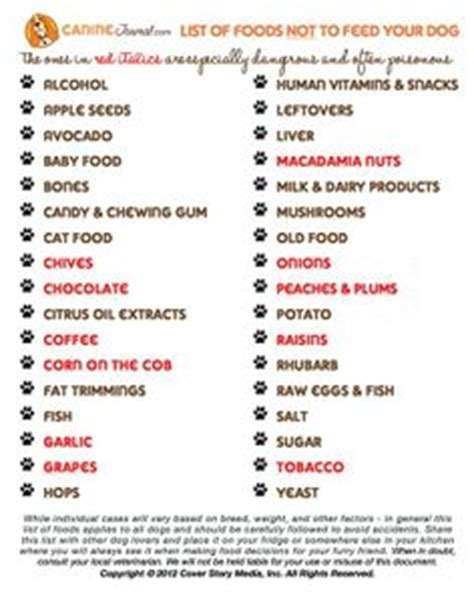 foods not to feed dogs 1000 images about infographics on pet insurance activities and